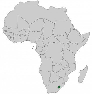 Continental map of Africa with countries outlined with highlighted Lesotho